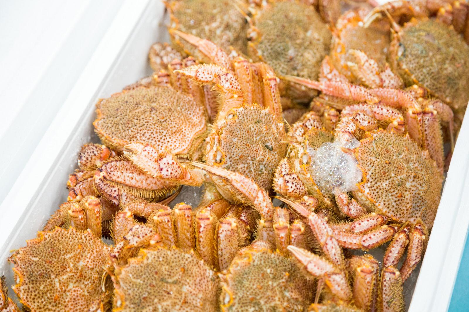 南三陸の美味しいタコ&市場見学 おすばでジャーニー#1