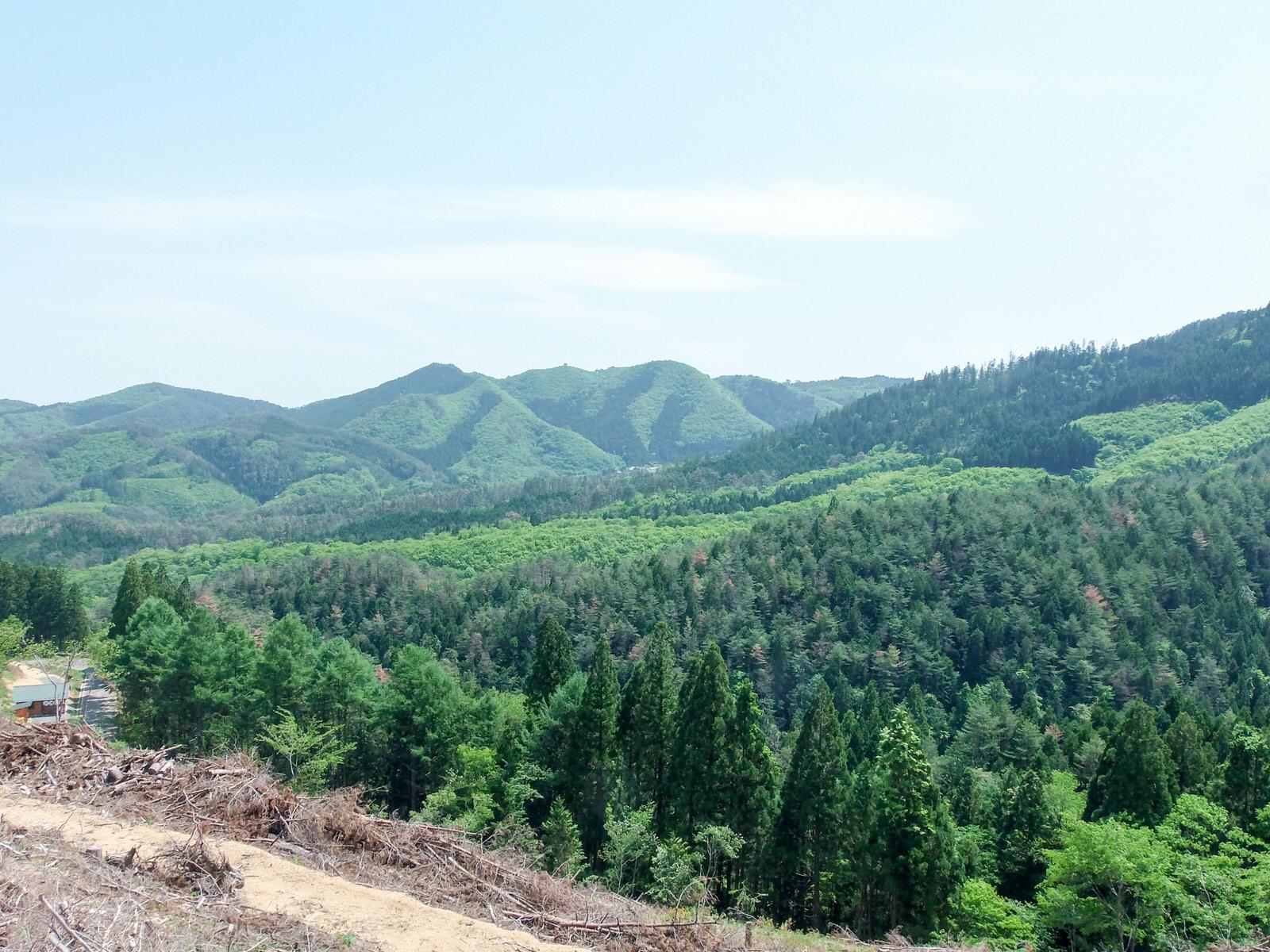 豊かな森のために